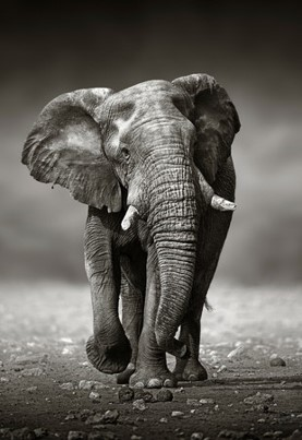 Films have an elephant memory